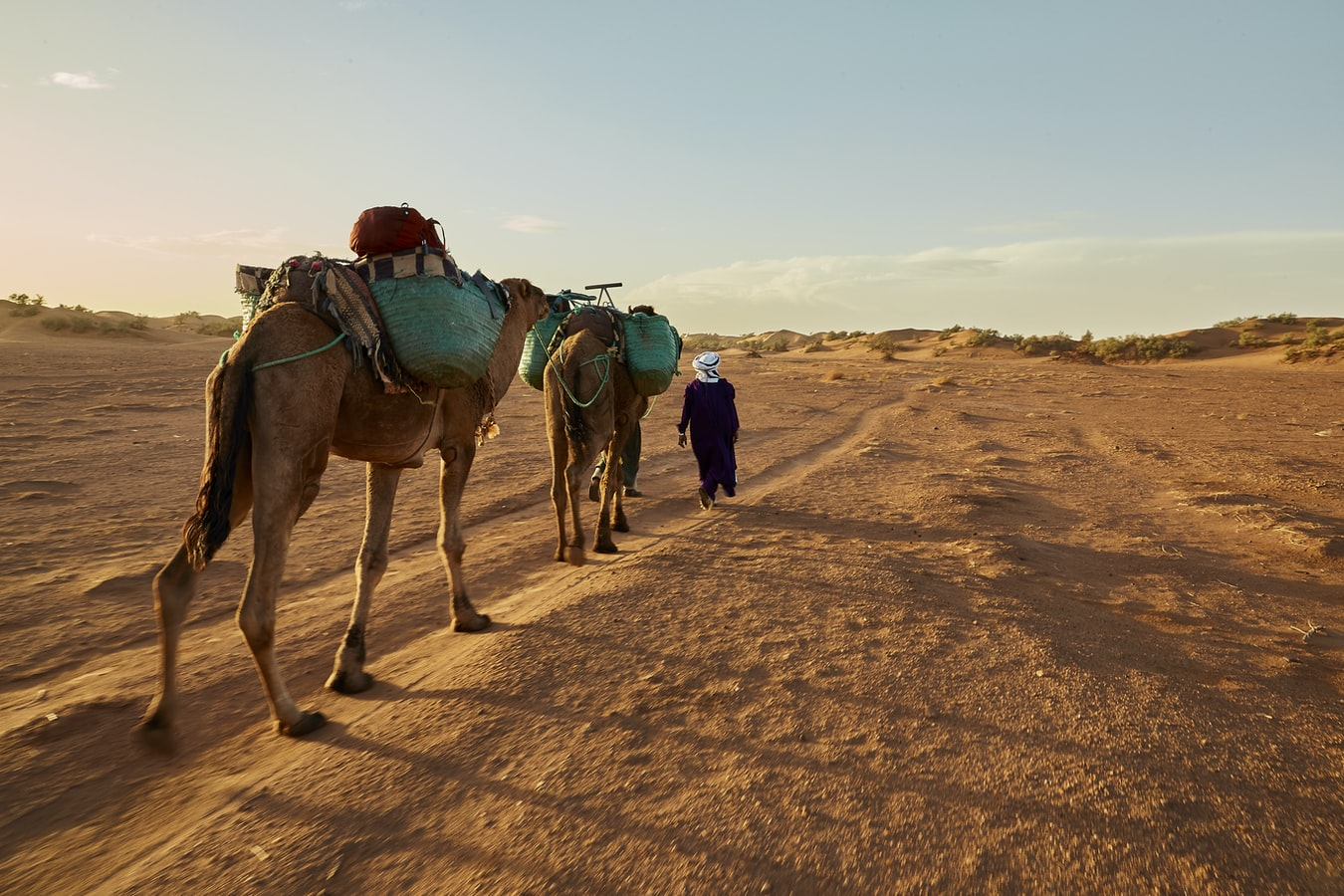 Much more than a desert: A trip into the Sahara